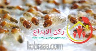 شركة مكافحة النمل الابيض بسيهات وعنك