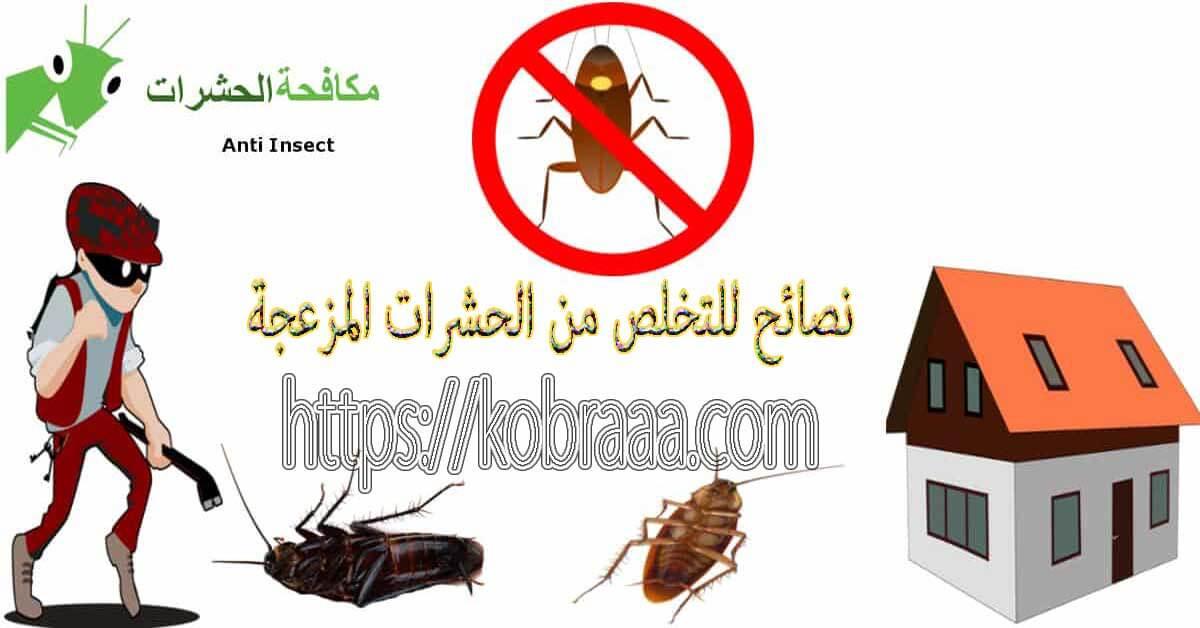 نصائح للتخلص من الحشرات المزعجة