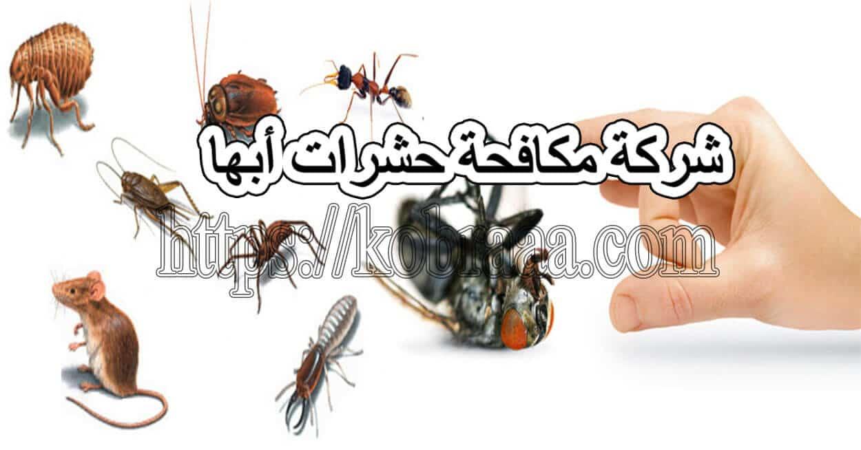 شركة مكافحة حشرات أبها