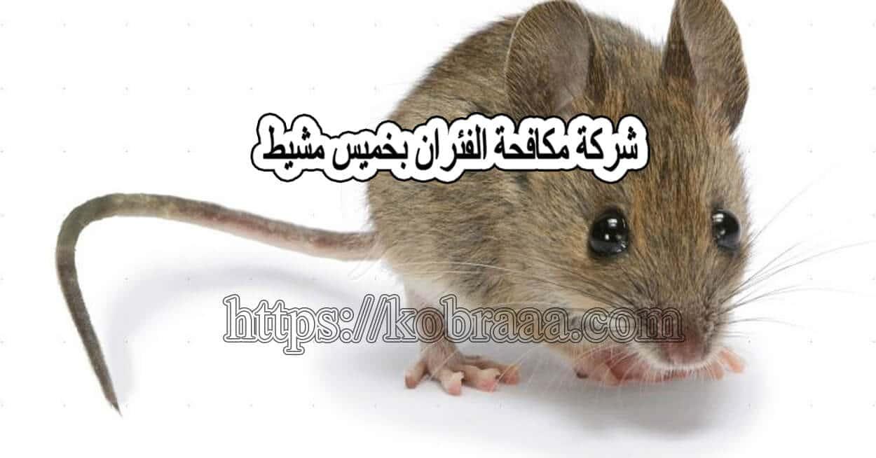 شركة مكافحة فئران بخميس مشيط